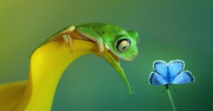 frog-and-butterfly-friendship